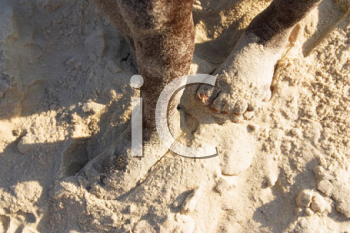 Royalty Free Photo of a Child's Foot in Sand