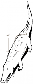 Royalty Free Clipart Image of an Alligator