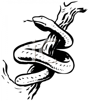Royalty Free Clipart Image of a Tree Snake
