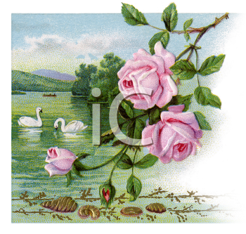 Royalty Free Victorian Illustration of a Rosebush with Swans Swimming on a Lake in the Background.