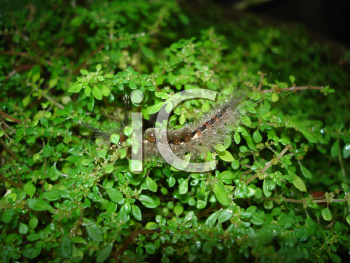 Royalty Free Photo of a Caterpillar on a Plant