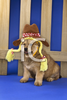 Royalty Free Photo of a Puppy Wearing a Hat and Braids Sitting in Front of a Picket Fence