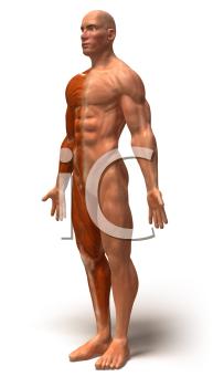 Royalty Free 3d Clipart Image of a Side View of a Muscular Man