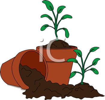 Royalty Free Clipart Image of Potted Seedlings
