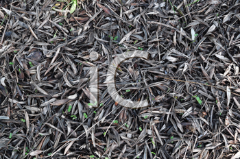 Royalty Free Photo of Dried Leaves With Fresh Green Showing Through