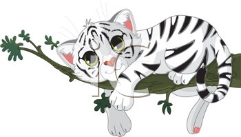 Cute white Tiger is on a branch