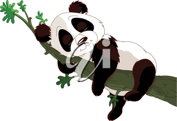 Royalty Free Clipart Image of a Panda Sleeping in a Tree