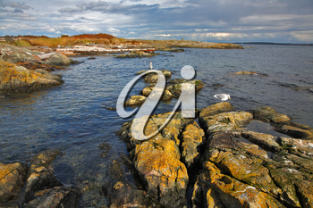 Royalty Free Photo of Seagulls on the Coast of Vancouver Island