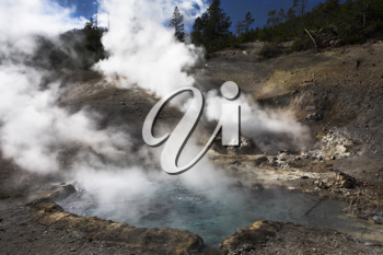 Boiling geothermal geyser  in Yellowstone Park