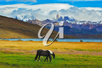 Impressive landscape in the national park Torres del Paine, Chile. Lake Laguna Azul in the mountains. On the shore of Lake grazing horses