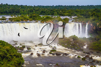 The fantastic roaring Iguazu Falls. Andean condors fly in the water dust. Huge complex of waterfalls Iguazu on the border of three countries. Concept of active and extreme tourism