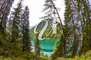 The concept of environmental and hiking. Walk around the lake Lago di Braies, Dolomites. Water reflects mountains and forest