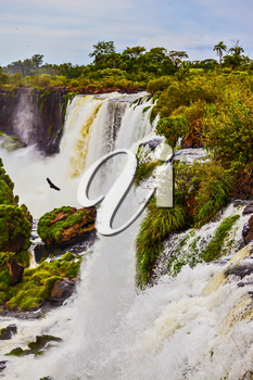The black Andean condors are circling above the water. Waterfalls Iguazu on the Argentina. Picturesque basaltic ledges form the waterfalls. The concept of active and exotic tourism