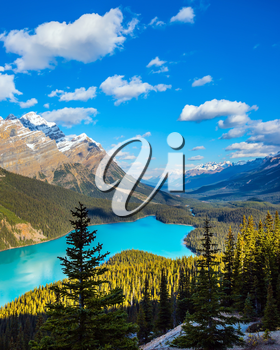 Picturesque Lake Peyto in Banff National Park. Turquoise water and the shape of the lake in the form of a wolf's head are popular with tourists