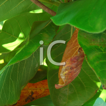 Royalty Free Photo of a Closeup of Leaves