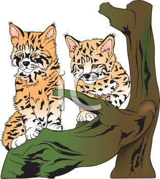 Royalty Free Clipart Image of a Lynx