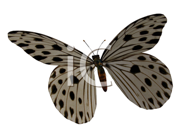 Royalty Free Clipart Image of a Spotted Butterfly