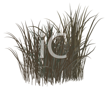 Royalty Free Clipart Image of a Clump of Grass