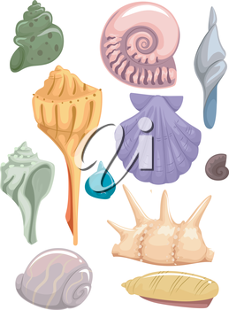 Illustration Set Featuring Different Types of Seashells
