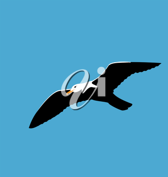 Illustration soaring seagull in blue sky, seabird isolated on blue background - vector