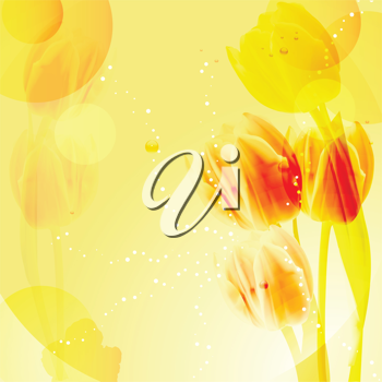 Tulips on an abstract yellow background