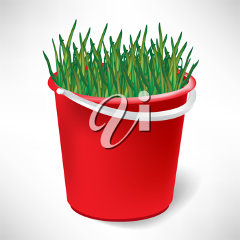 red bucket with growing grass isolated on white background