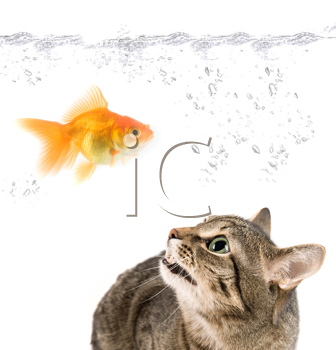 Royalty Free Photo of a Cat Watching a Goldfish in a Bowl