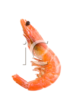 King Shrimp isolated on white background