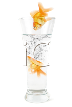 Royalty Free Photo of Goldfish Jumping into a Glass of Water