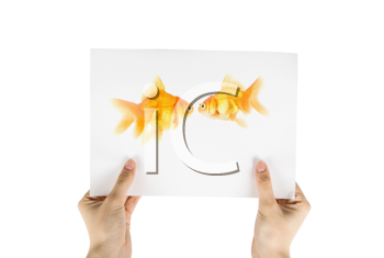 Royalty Free Photo of Someone Holding a Picture of Goldfishes