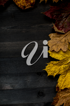Wood autumn background with free space for design