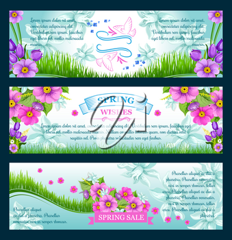 Spring Sale banners and greeting wishes design for springtime seasonal discount promo shopping offer. Spring flowers of tulip blossoms, daisy bouquets and blooming daffodil petals on green grass