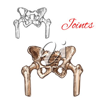 Human pelvis bones and sacrum joints vector sketch body anatomy icon. Isolated symbol of renal pelvis or spine part of skeleton structure for anatomical or medical surgery design