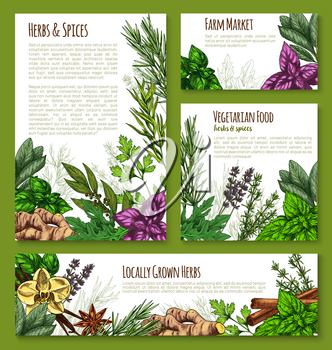 Herb, spice and leaf salad vegetable sketch banner template. Green basil, mint, rosemary, thyme, cinnamon, arugula, parsley, vanilla, ginger, anise, bay, sage, lavender for natural spice shop design