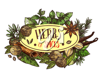 Herbs and spices symbol for seasoning or condiments. Rosemary and thyme, basil and mint, sage and bay leaf, nut and oregano, seeds and cinnamon sticks. Fragrant plants for cooking vector isolated