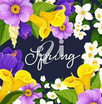 Spring poster design for springtime seasonal holiday wish. Vector floral bunch frame of blooming daffodils, tulips and crocuses or calla lily flowers bouquet in bloom or daisy flowery blossoms