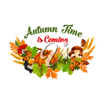 Autumn Time is coming poster of seasonal fall harvest and leaf foliage. Vector design of pumpkin, mushroom or rowan berry and wheat or rye on maple leaves and oak acorn for autumn holiday greeting