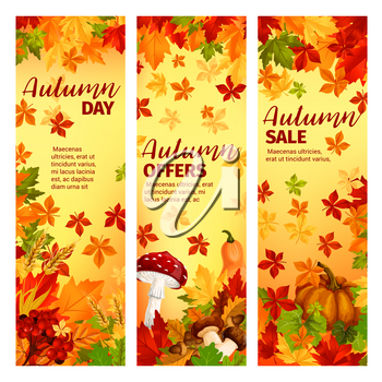 Autumn season sale banner set of fall leaf, pumpkin and mushroom. Orange maple foliage, fall harvest pumpkin vegetable, forest mushroom, acorn and rowan berry branch retail promotion poster design