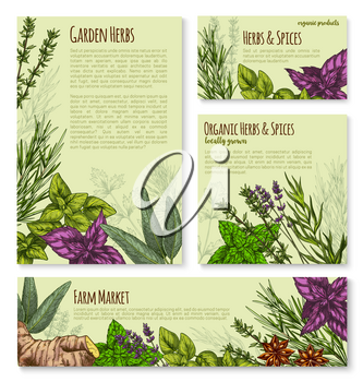 Garden herb and spice, seasoning banner template set. Basil leaf, rosemary, thyme, mint, parsley, ginger, dill, anise star, oregano, lavender flower, sage sketch poster for organic food shop design