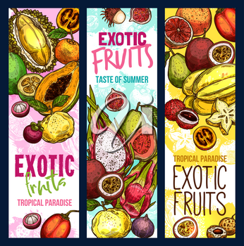 Exotic fruits and tropical fruit harvest banners. Vector sketch design of fresh mangosteen, exotic jackfruit and lychee or mango, dragonfruit pithaya and papaya, rambutan and passion fruits