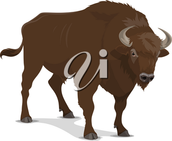 Bison animal or wild mammal. American buffalo bull, bison or ox with brown thick fur and sharp horns. Hunting sport open season or hunter club symbol, dangerous beast on hooves, isolated vector animal