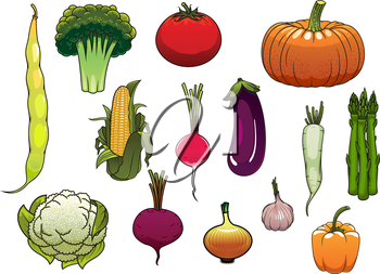 Colorful fresh tomato, pumpkin, corn cob, onion, broccoli, cauliflower, bell pepper, asparagus, eggplant, radish, common bean, daikon, garlic and beet vegetables from the autumn harvest