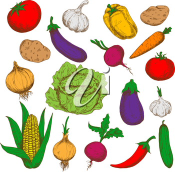 Farm grown fresh green cabbage and cucumber, ripe potatoes, beetroots and eggplants, red tomatoes and cayenne pepper, sweet corn, carrot and bell pepper, pungent garlics and onions vegetables. Healthy
