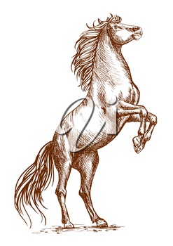 Brown horse rearing on hind hoofs sketch vector portrait. Unbridled mustang stallion stands on its rears