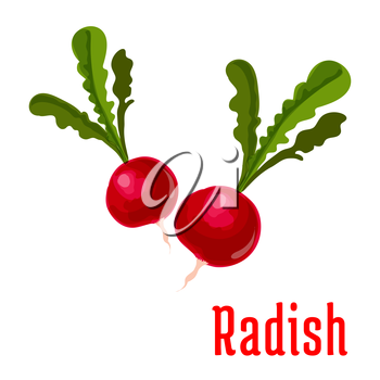 Radish vegetable plant icon. Bunch of garden radishes with leaves. Fresh food product element for sticker, grocery shop, farm store element