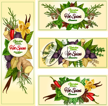 Spice herb and condiment banner set of hot chilli pepper, mint, dill, rosemary, basil, anise, thyme, ginger, vanilla, cinnamon, bay, arugula, tarragon, fennel. Label, sticker, food design