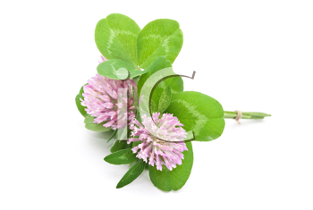 Herbal medicine:Red clover