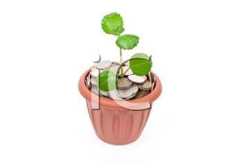 Seedling growing in money