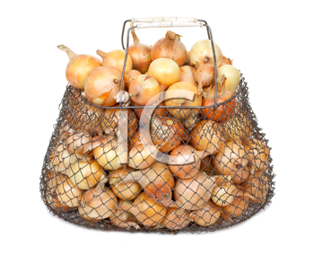 Onions in the mesh bag