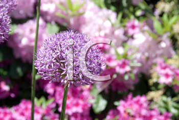 Royalty Free Photo of a Flower in a Garden